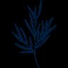 herb, fresh herb, thai herb, plant, leave, tree